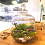 Dru Holland Moss Terrarium Centerpiece