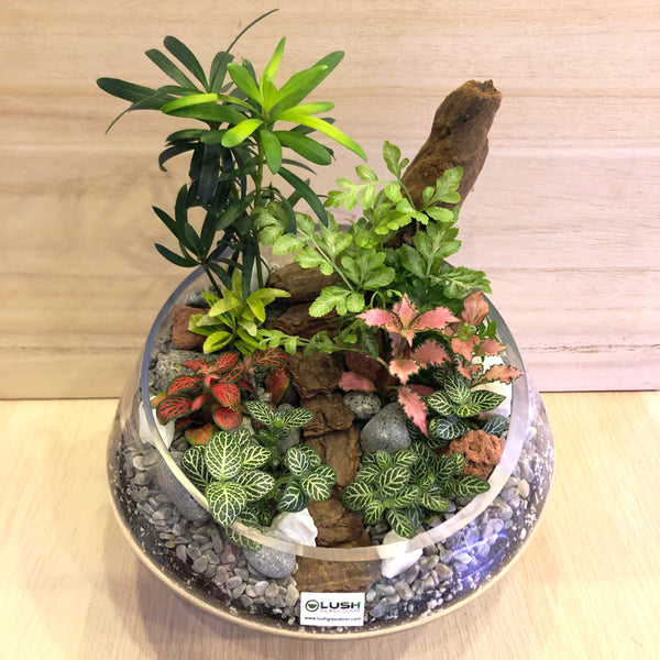 Lyla Tropical Plants Premium Terrarium