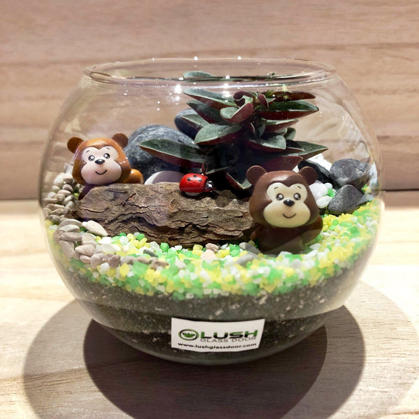 Customized Olli Succulent Terrarium in Small Round Bowl by Lush Glass Door Singapore
