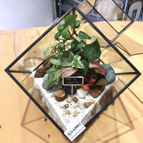 Customized Life Is Beautiful Garden Themed Tropical Fittonias & Pilea Square Geometric Terrarium by Lush Glass Door Singapore