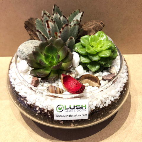 Customized Mesmerizing Maya Succulents Arrangement Mid Range Terrarium by Lush Glass Door Singapore