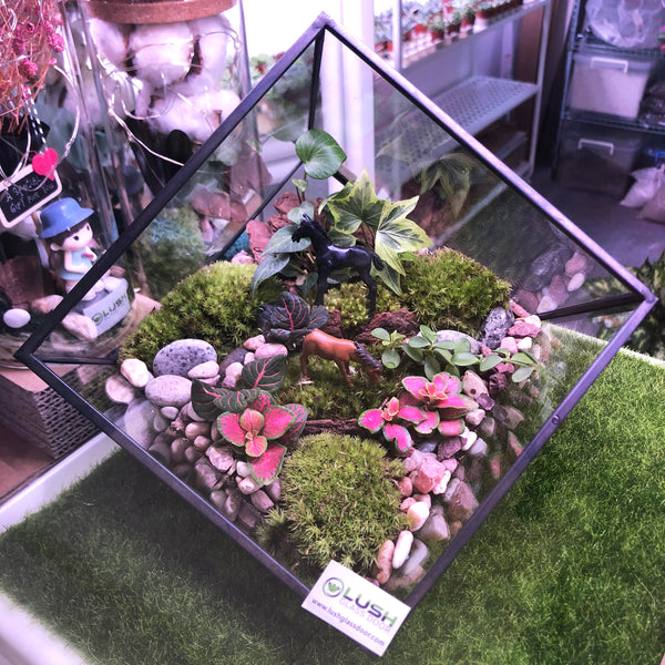 Customized Leith Square Geometric Terrarium by Lush Glass Door Singapore