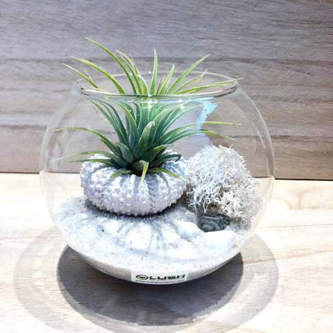 Customized Wynonna Airplant Terrarium by Lush Glass Door Singapore
