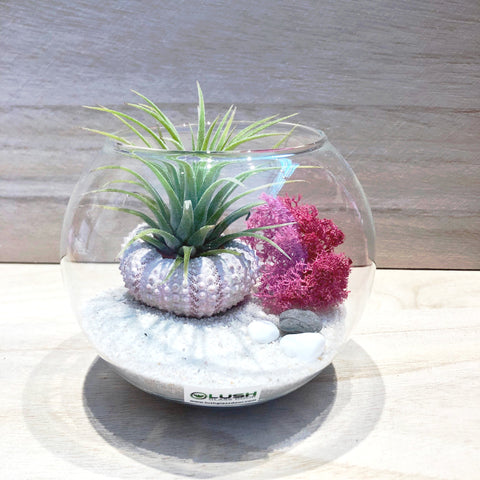 Customized Adeline Airplant Terrarium by Lush Glass Door Singapore
