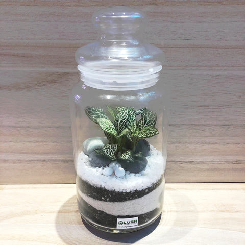 Customized Eustace Sand Layering Fittonia Story Jar Terrarium by Lush Glass Door Singapore
