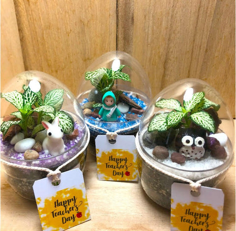 Teacher's Day Mini Egg Shaped Terrarium by Lush Glass Door Singapore