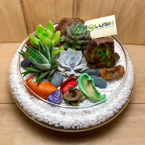 Customized Lovely Benicio Succulents Arrangement Mid Range Terrarium by Lush Glass Door Singapore