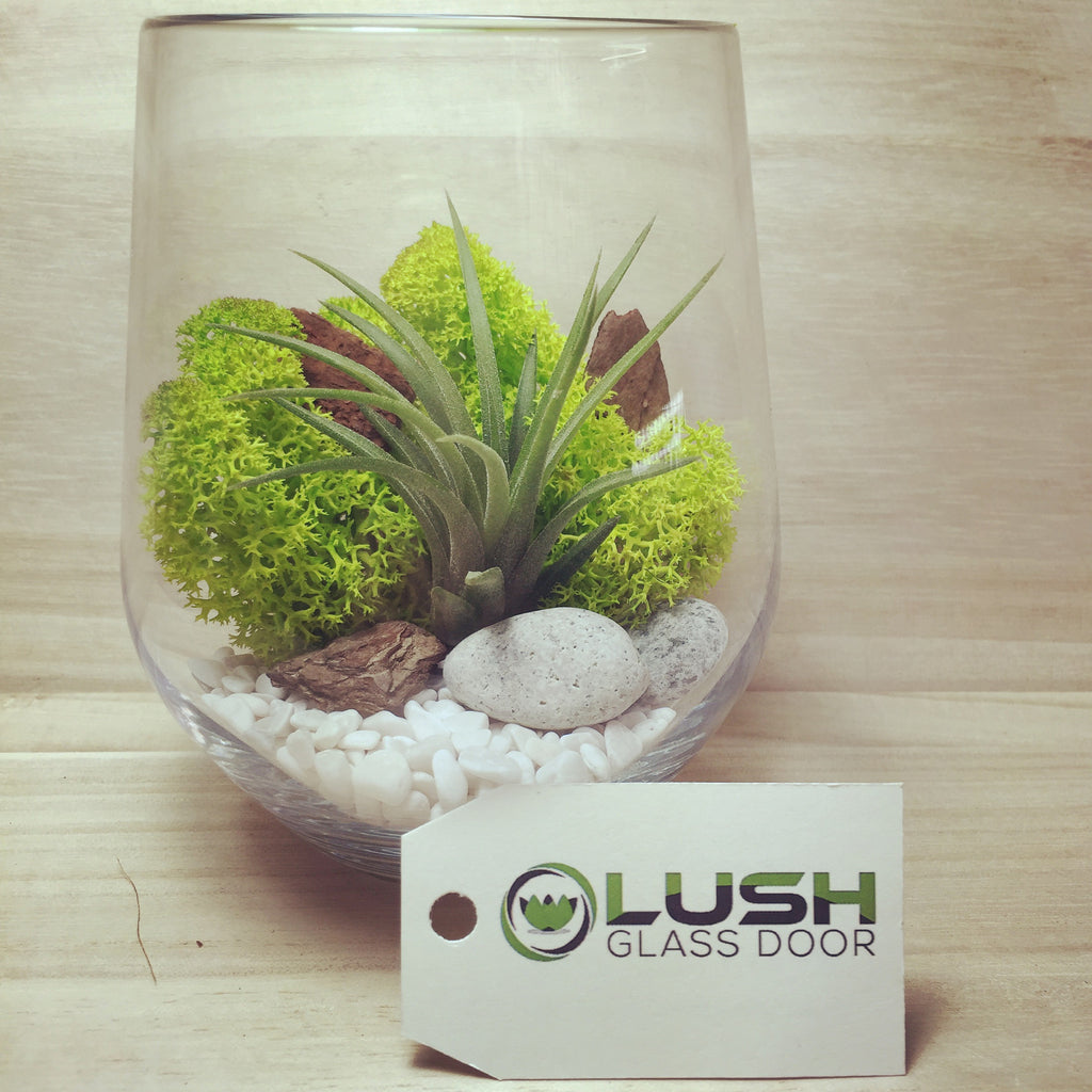 Modern Lonnie Airplant Terrarium Created By Lush Glass Door