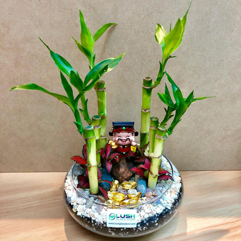 Customized Hector Auspicious Lucky Bamboo Terrarium by Lush Glass Door Singapore