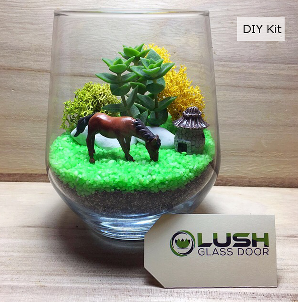 Succulent Terrarium DIY Kit By  Lush Glass Door