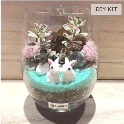 Succulent Terrarium DIY Kit 01 by Lush Glass Door