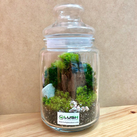 Customized Peridot Holland Moss Story Jar Terrarium by Lush Glass Door Singapore