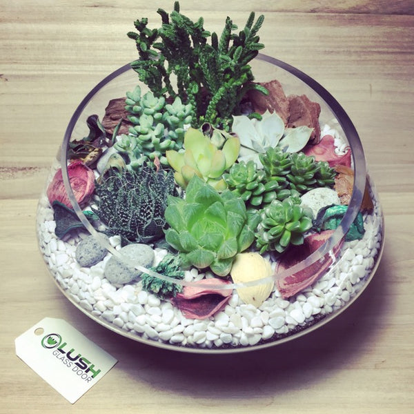 Customized Floral Garden Themed Succulents Premium Terrarium by Lush Glass Door Singapore