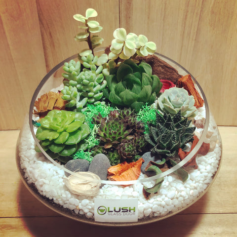 Customized Blossoming Garden Themed Succulents Premium Terrarium by Lush Glass Door Singapore