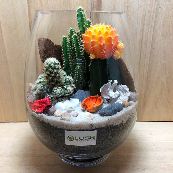 Customized Beautiful Sunrise Desert Cactus Terrarium by Lush Glass Door Singapore