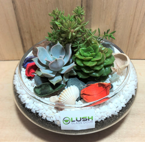 Customized Amya Succulents Arrangement Mid Range Terrarium by Lush Glass Door Singapore