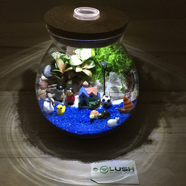 Customized Happenings at the Sea Themed Fittonia Terrarium with Light by Lush Glass Door Singapore