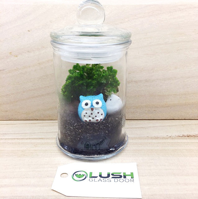 Teacher S Day Special Adorable Blue Owl Themed Live Moss In Mini