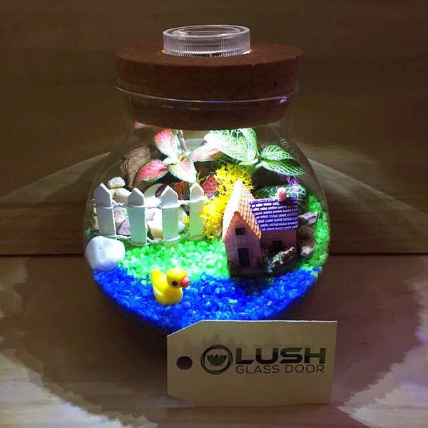 Customized By the Pond Themed Fittonia Terrarium with Light by Lush Glass Door Singapore