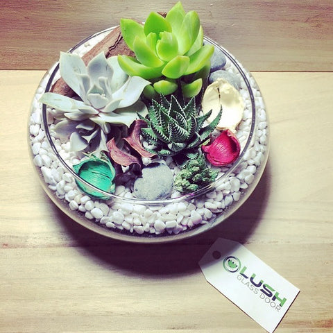 Customized Lovely Succulents Arrangement Mid Range Terrarium by Lush Glass Door Singapore