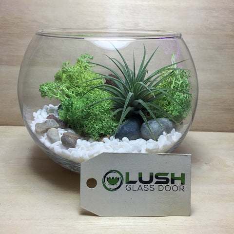 Customized Airplant Lush Green Themed Terrarium by Lush Glass Door Singapore
