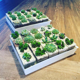 Mini Succulents in Square Pot by Lush Glass Door Singapore