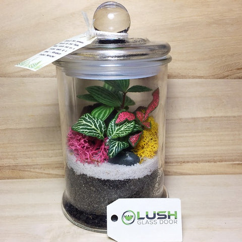 Customized Xanthos Fittonia & Pilea Story Jar Terrarium by Lush Glass Door Singapore