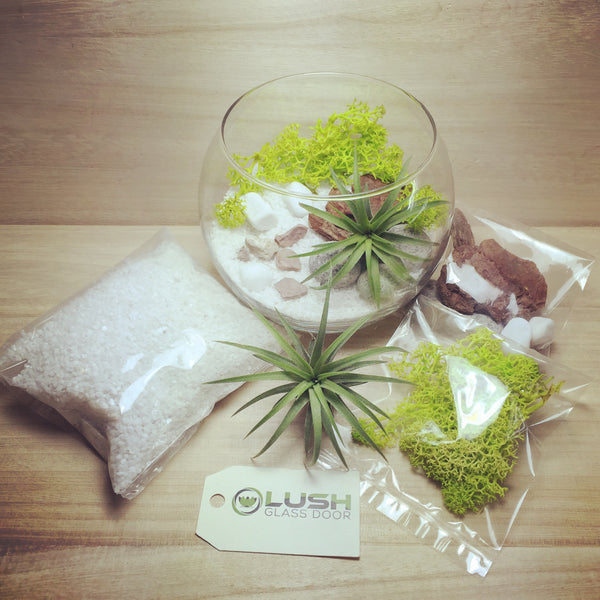Design Your Own Airplant Terrarium DIY Kit by Lush Glass Door Singapore