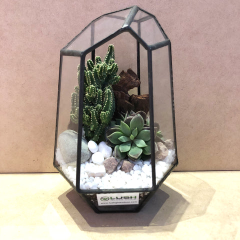 Ash Succulents Arrangement in Diamond Geometric Terrarium by lush glass door