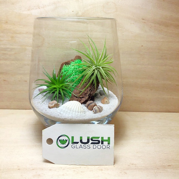 Customized Connor Airplant Terrarium by Lush Glass Door Singapore