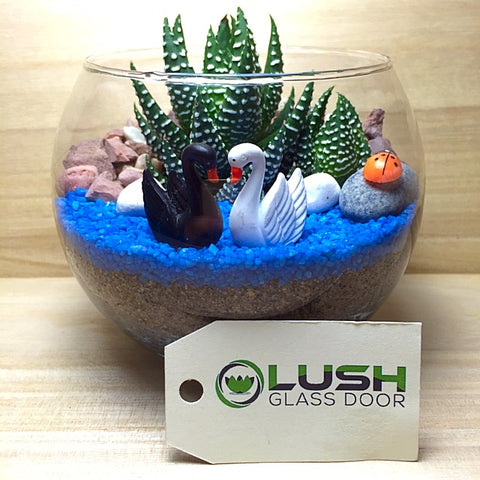 Terrarium Workshop Package D by Lush Glass Door