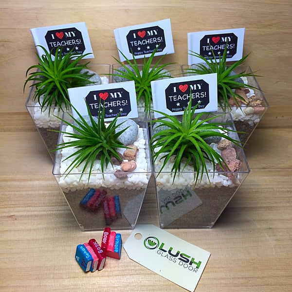 Mini Airplants in Square Pot by Lush Glass Door Singapore
