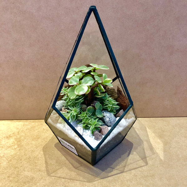 Tyrese Succulents Arrangement in Teardrop Geometric Terrarium