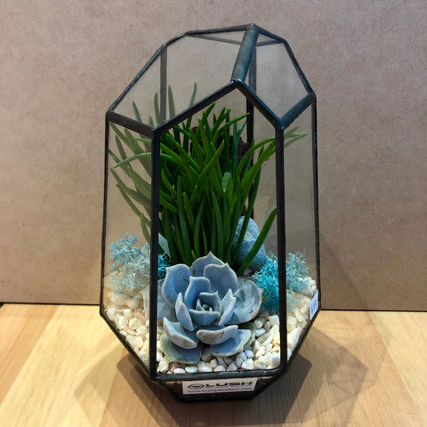 Kirk Succulents Arrangement in Diamond Shape Geometric Terrarium by lush glass door