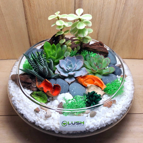 Customized Lovely Jurissa Succulents Arrangement Mid Range Terrarium by Lush Glass Door Singapore