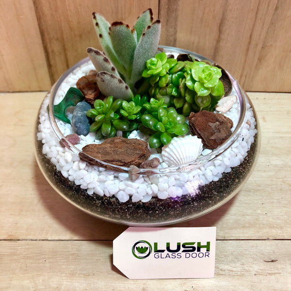 Customized Amber Succulents Arrangement Mid Range Terrarium by Lush Glass Door Singapore