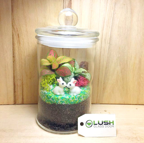 Customized Marlene Fittonia Story Jar Terrarium by Lush Glass Door Singapore