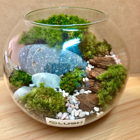 Customized Bea Holland Moss Bowl Terrarium by Lush Glass Door Singapore
