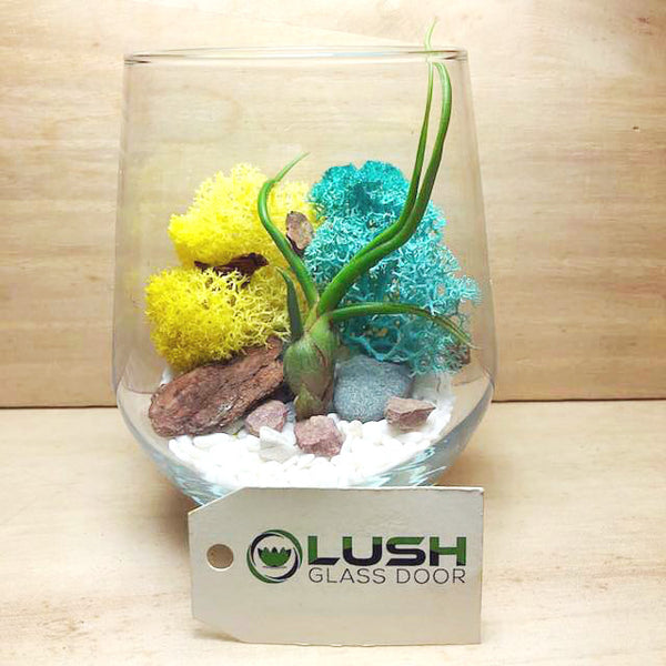 Customized Charlene Airplant Terrarium by Lush Glass Door Singapore