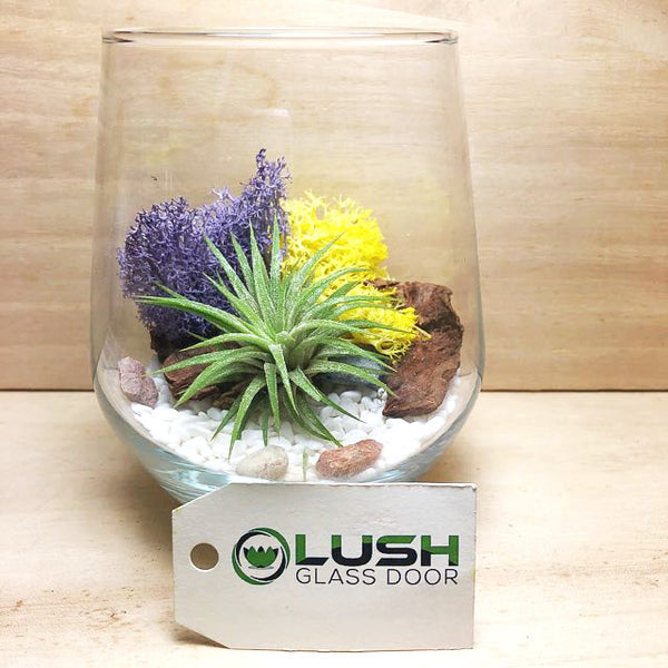 Customised Bronson Airplant Terrarium by Lush Glass Door Singapore