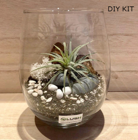 Airplant Terrarium DIY Kit 02 by Lush Glass Door Singapore