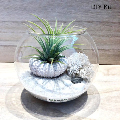 Airplant Terrarium DIY Kit 03