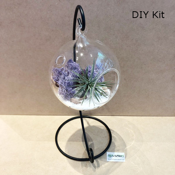Airplant Terrarium DIY Kit 04