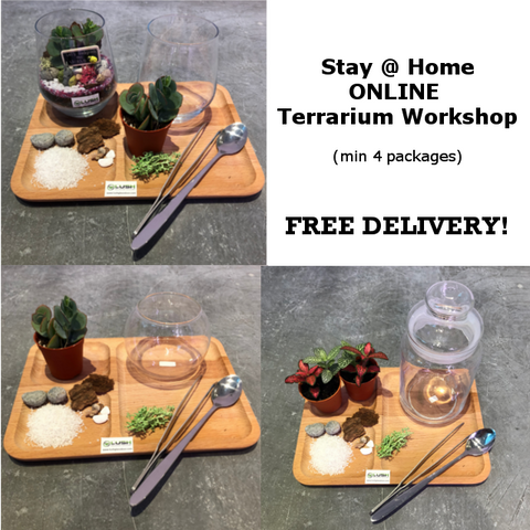 Stay @ Home (ONLINE) Terrarium Workshop