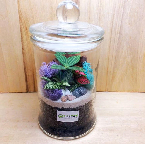 Customized Tiffany Fittonia & Pilea Story Jar Terrarium by Lush Glass Door Singapore