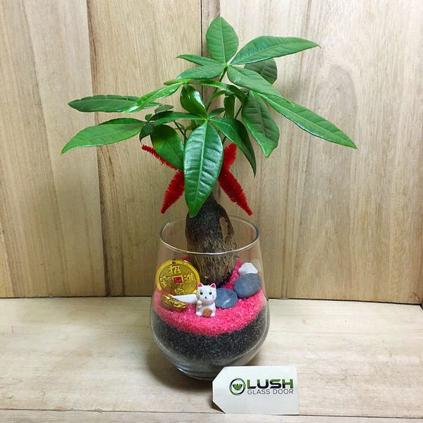 Customized Nani Prosperous Pachira (Money Plant) Terrarium by Lush Glass Door Singapore