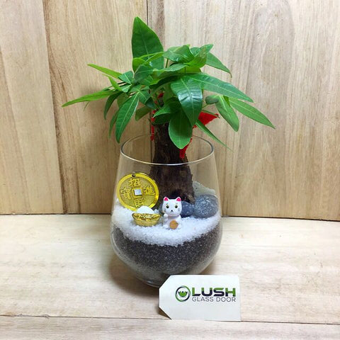 Customized Kaitlyn Prosperous Pachira (Money Plant) Terrarium by Lush Glass Door Singapore