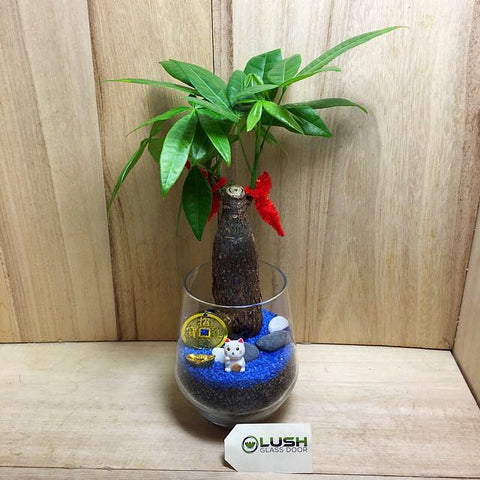 Customized Alfonso Prosperous Pachira (Money Plant) Terrarium by Lush Glass Door Singapore