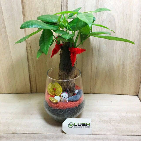 Customized Jentry Prosperous Pachira (Money Plant) Terrarium by Lush Glass Door Singapore