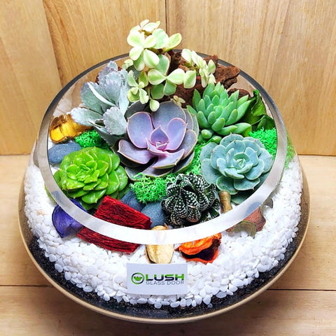 Customized Flourishing Garden Themed Succulents Premium Terrarium by Lush Glass Door Singapore